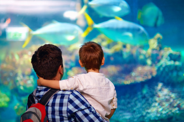 Dad and son watching fish at Ripley's Aquarium of the Smokies, using the free Smoky Mountain attraction tickets with your Pigeon Forge cabin