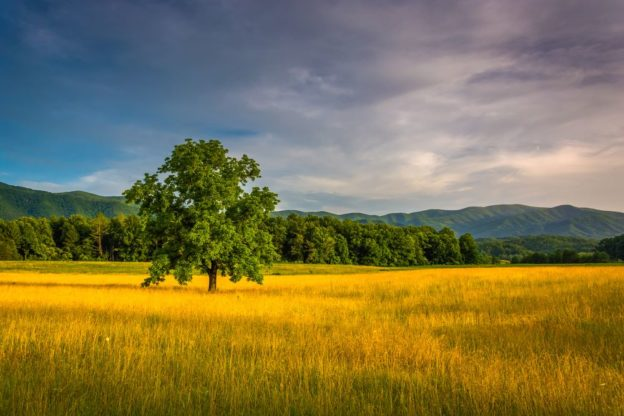 Cades Cove bathed in afternoon sunlight