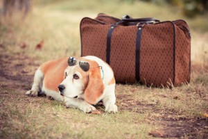 dog with suitcase ready for pet friendly Smoky Mountain vacation